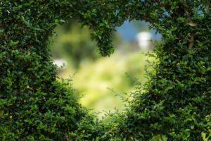 heart_in_bush